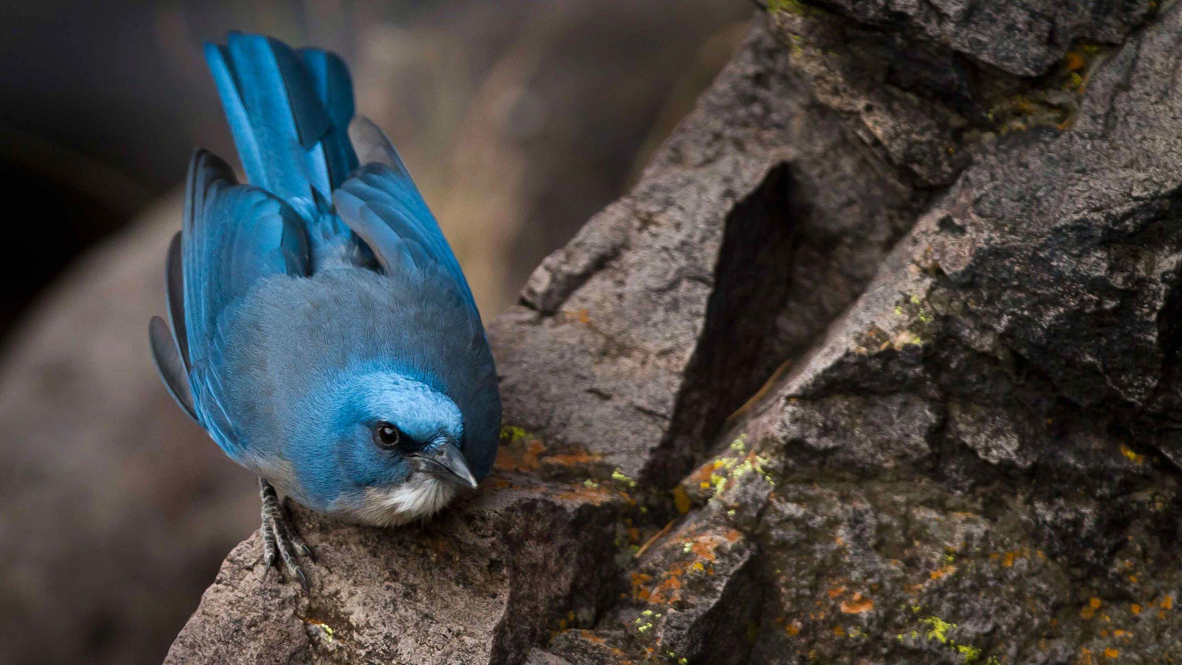 different types of jays u2014 colorful birds audubon birds