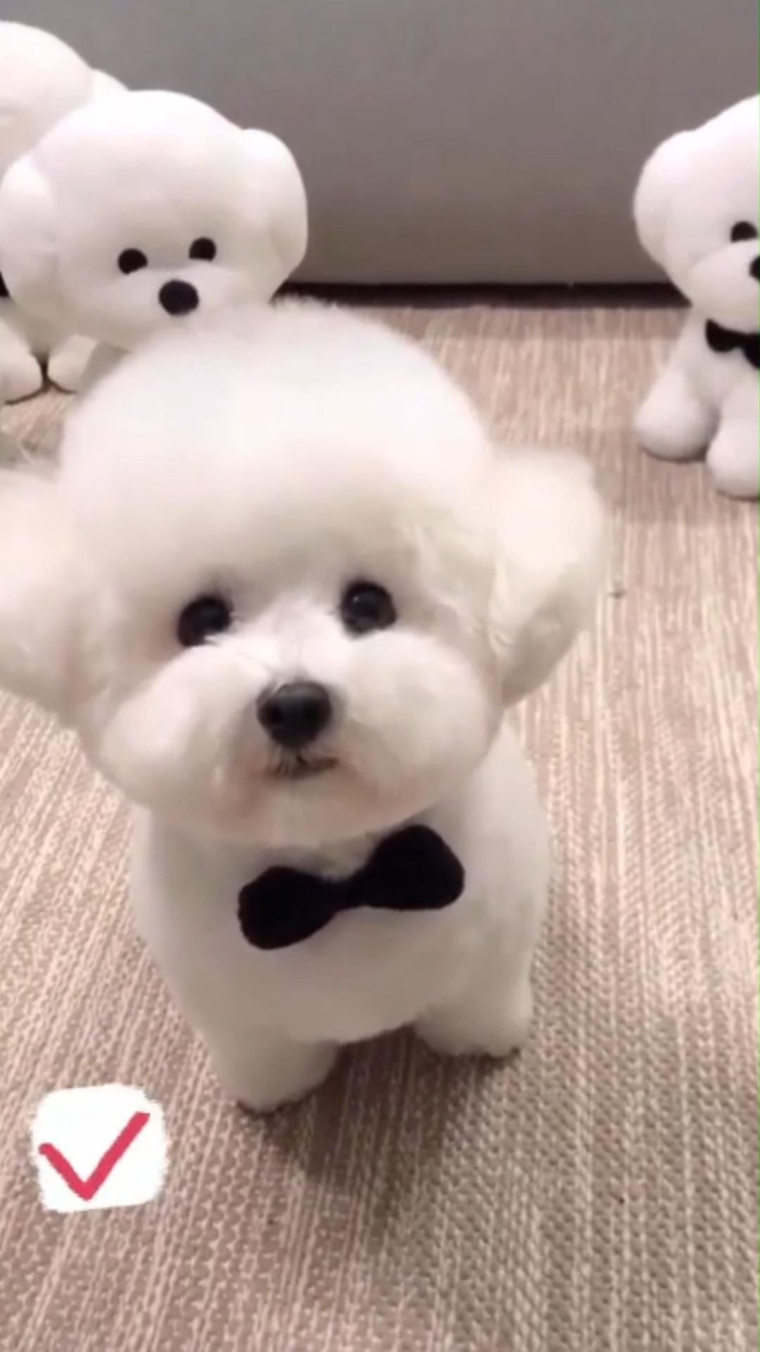 Adorable Puppy Looks Like The Toys