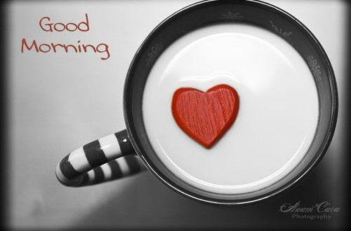 Good Morning My Love Images Guten Morgen Liebling Zitate