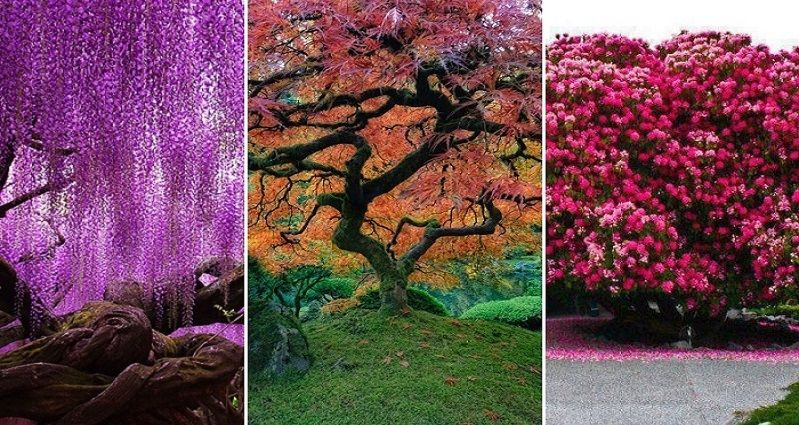 12 Of The Most Beautiful Trees Around the World
