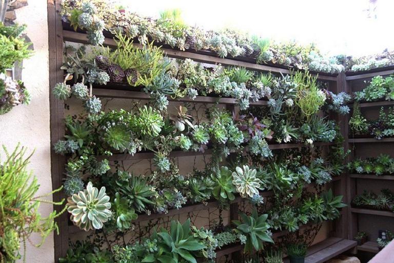 Admirable Garden Succulent Decor Ideas Succulent Garden Outdoor Plants Succulent Landscaping
