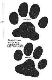 snow leopard paw print - Google Search | Ideas? | Snow leopard