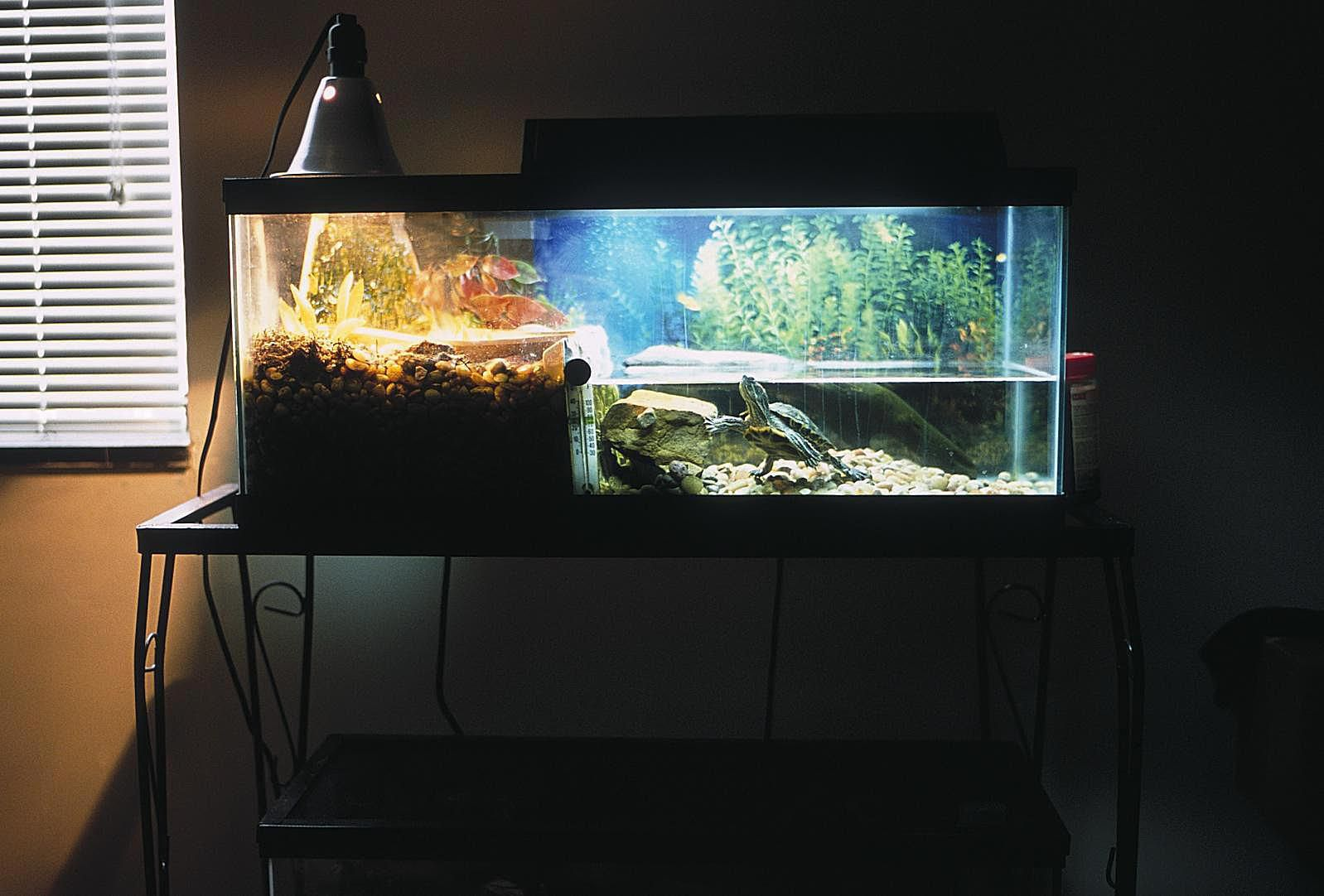 Keeping Red eared sliders' tanks clean can be a challenge