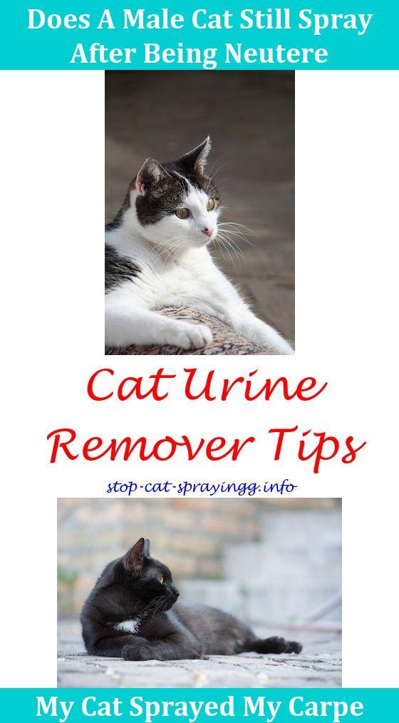 Cat Water Spray Repeller | Cat spray Cat pee Cats