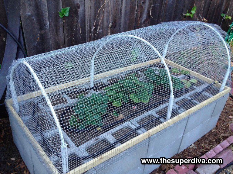 Raccoon and squirrel proof cages for our veggie garden PVC pipe