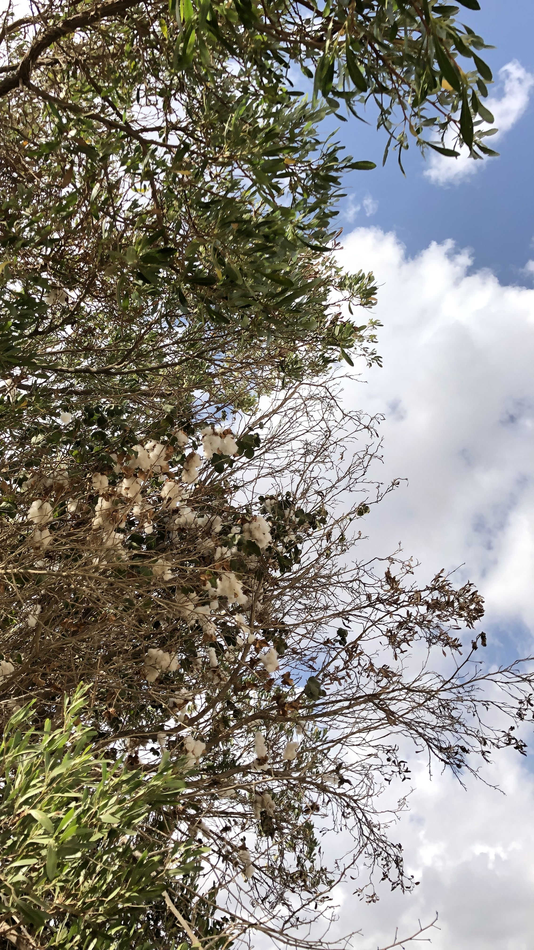 شجر Tree خلفيات ايفون افكار ابداع قطن Outdoor Phone Wallpaper Clouds