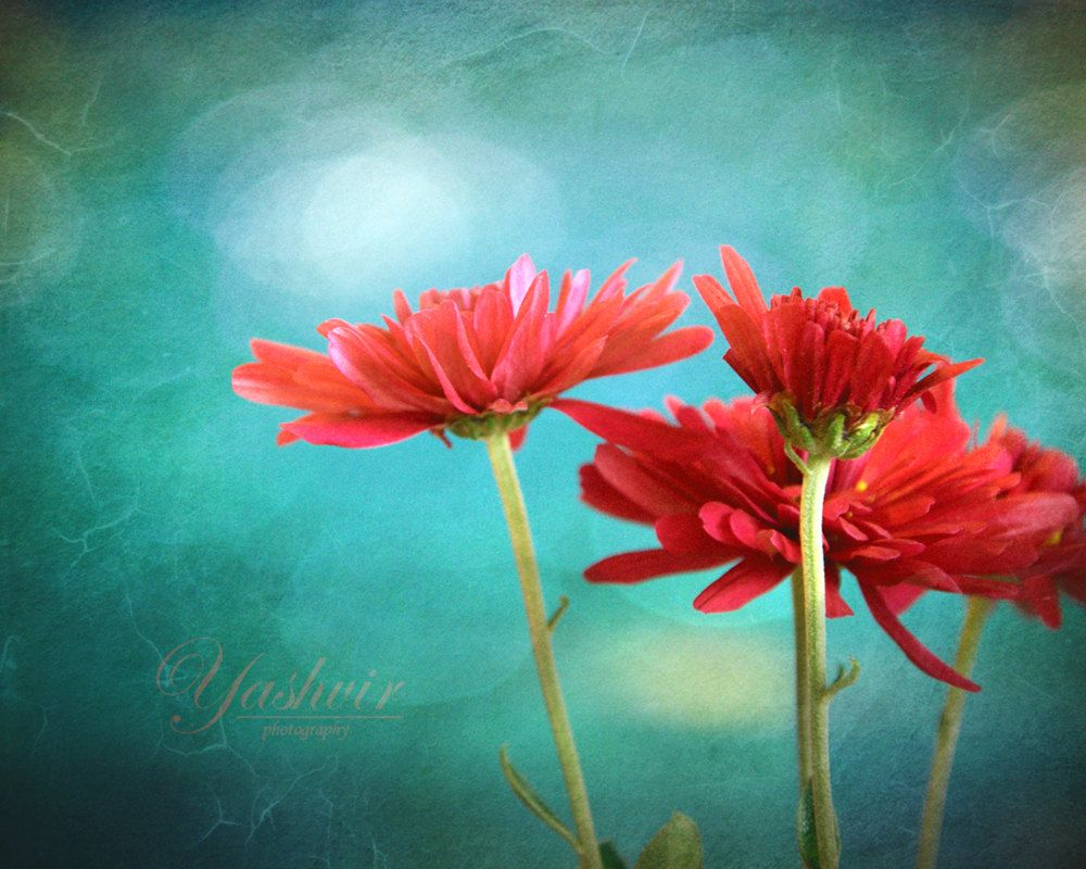 Flower parade- Photography print of flowers. Blue teal background ...