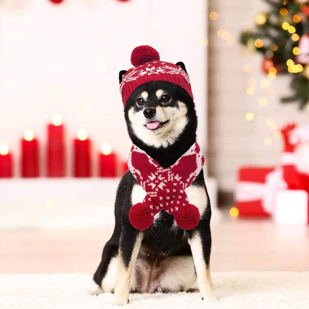24 Holiday Pet Costumes to Add to Your Amazon Cart Right