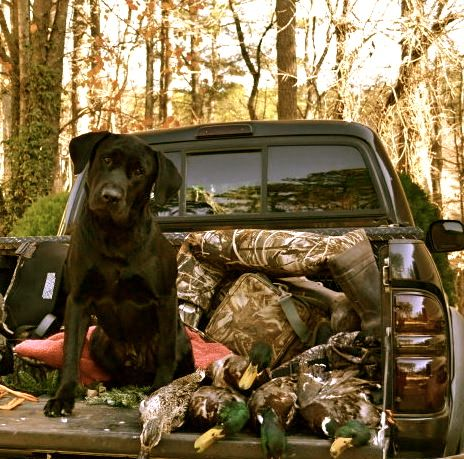 <3 I want a dog raised to go hunting with me
