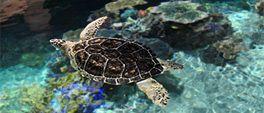 Baltimore Aquarium with lots of water animals