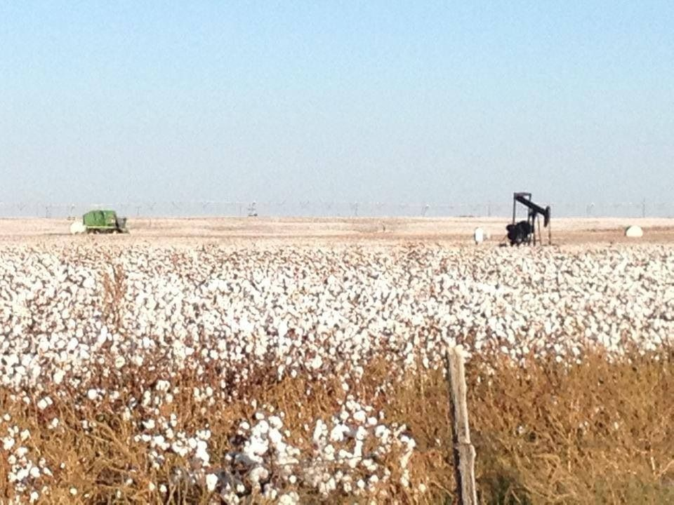 Texas cotton!