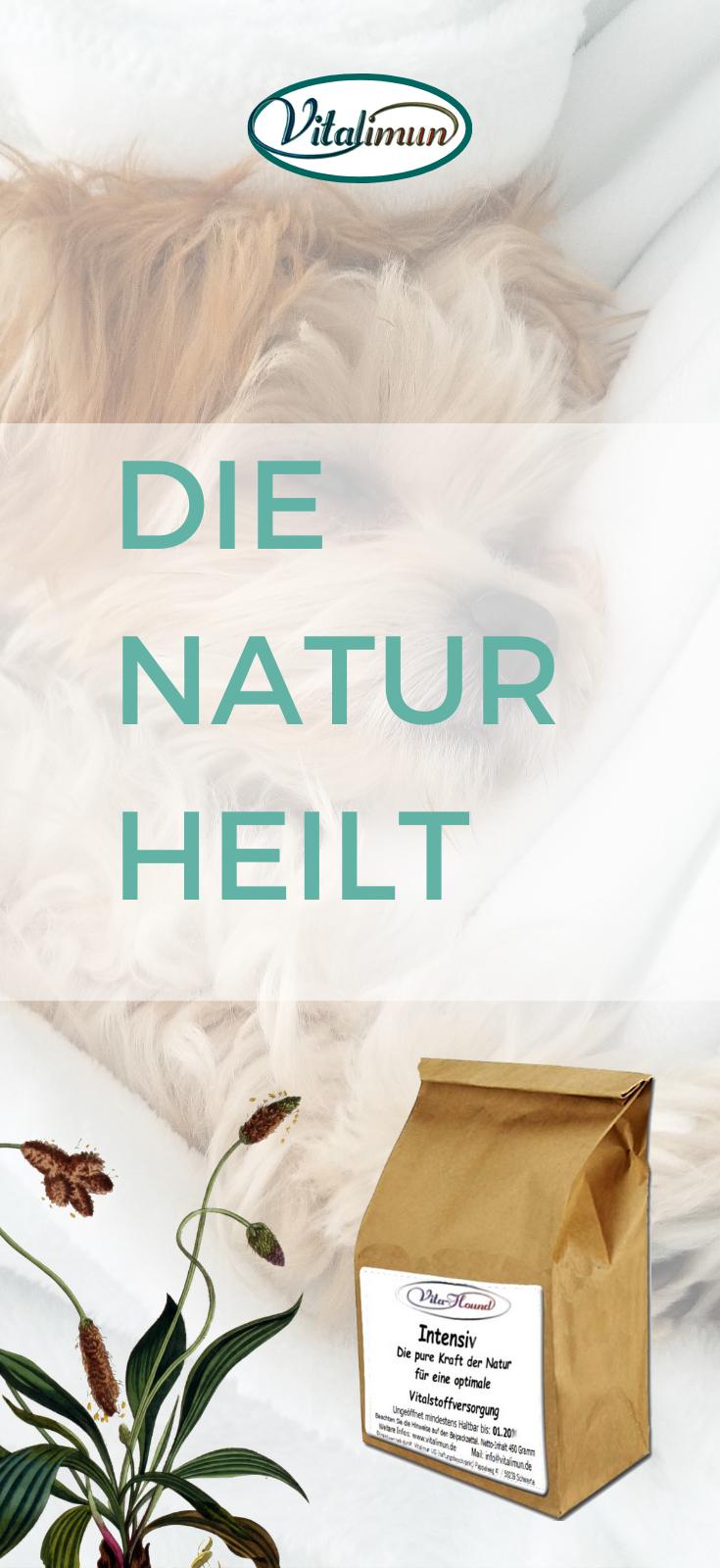 Kranker Hund  Die Natur heilt  Hi