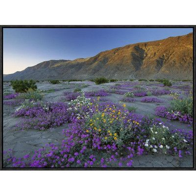 Global Gallery Sand Verbena and Desert Sunflowers Anza-Borrego Desert State Park, California by Tim Fitzharris Framed Photographic Print on Canvas ...