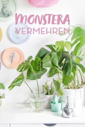 diy pflanzenliebe monstera vermehren tipps plants plant decor und green plants. Black Bedroom Furniture Sets. Home Design Ideas