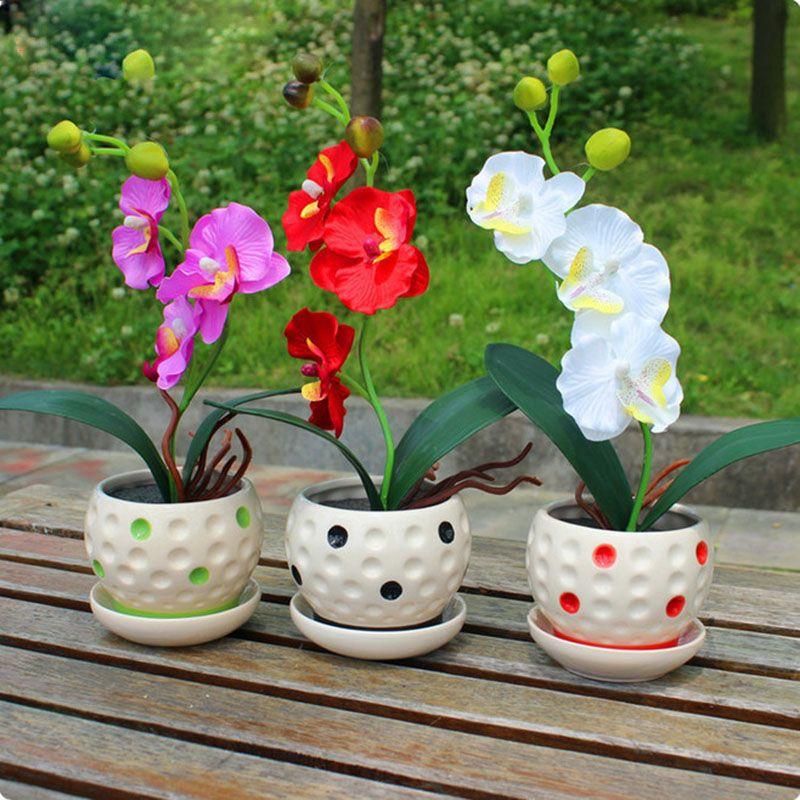 200 unids 22 variedades de Semillas de Flores Bonsai Semillas de Orquídeas Phalaenopsis Orquídea Plantas Ornamentales de Interior de Alto Nivel
