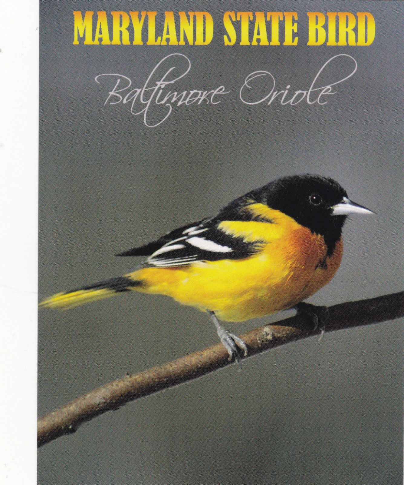 how to attract orioles in missouri