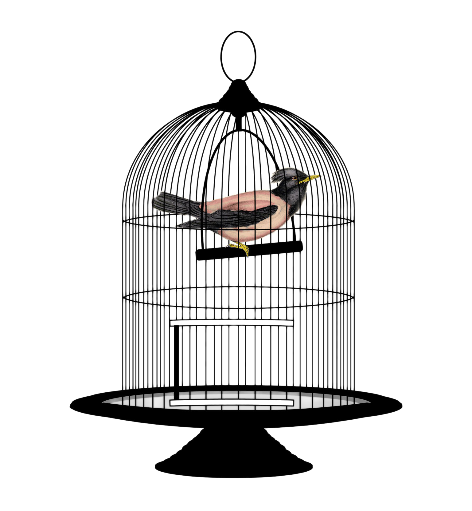 Related Image Bird Cage Cage Bird