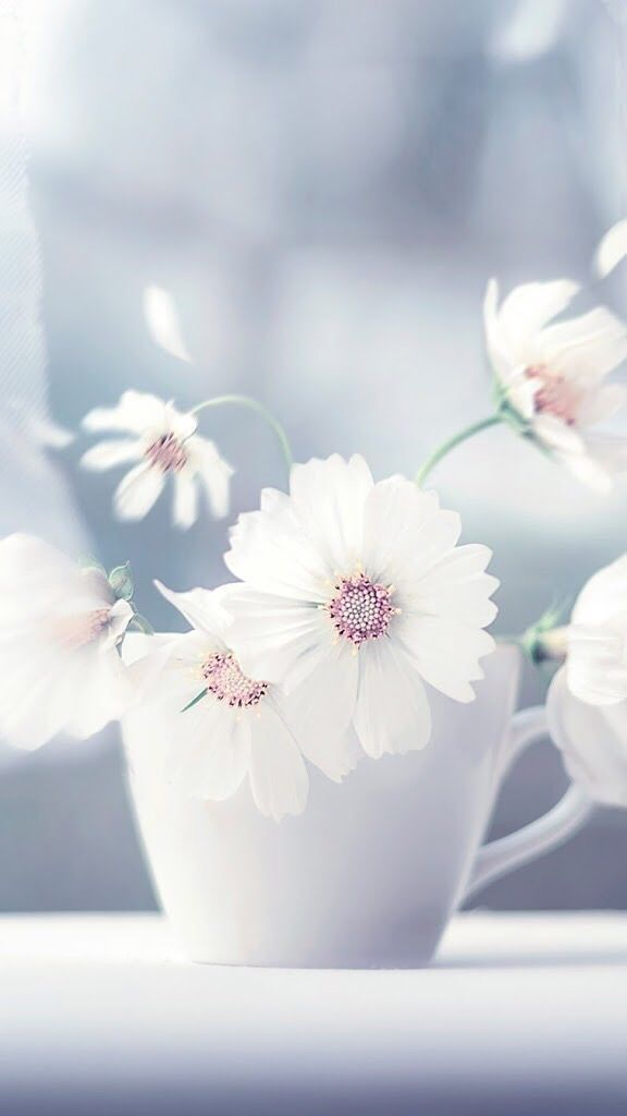 Beautiful Flower Wallpapers for your Desktop Mobile and Tablet