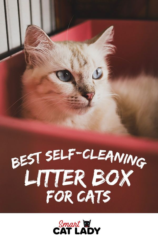 Best Self-Cleaning Litter Box For Cats