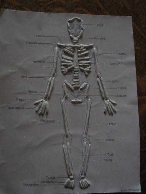 Human Skeleton Hand Diagrams In Skeleton Biological Science