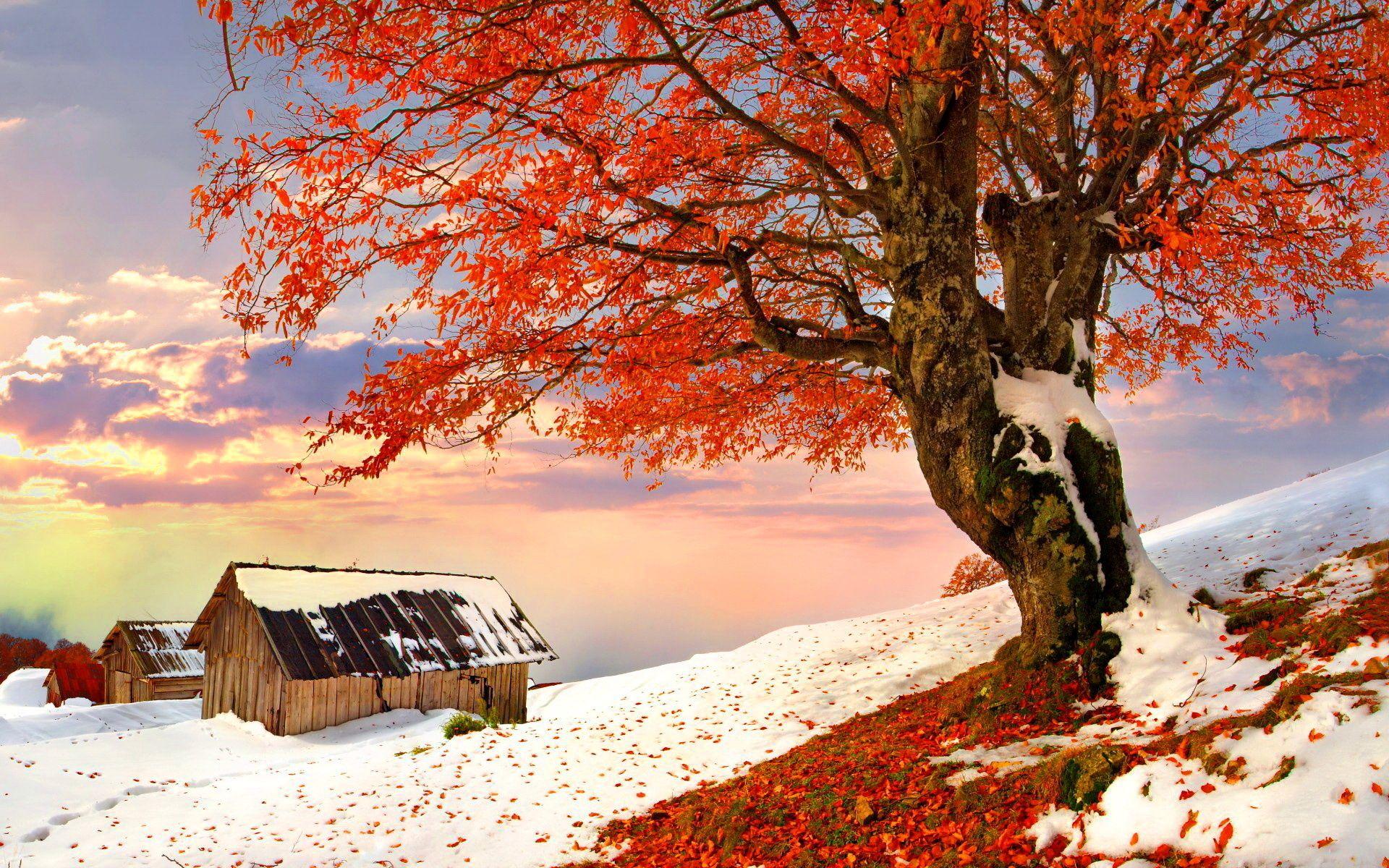желаний, картинки про природу осень и зиму тебя