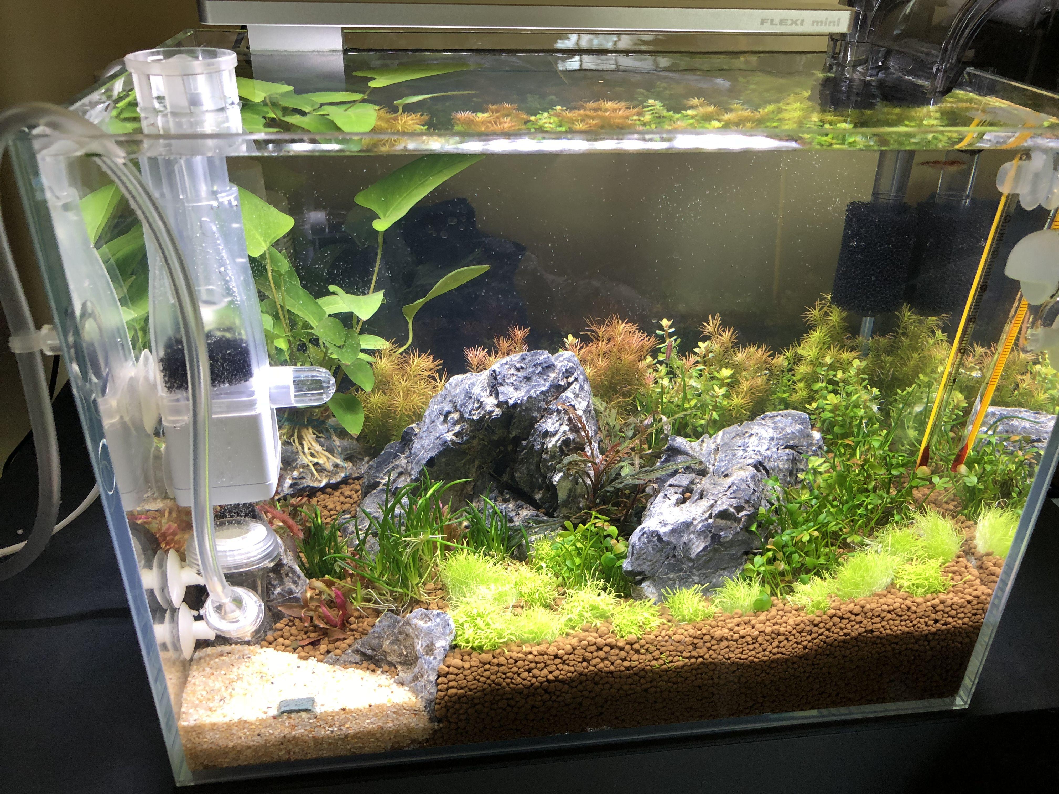 Dos Semanas De Mi Nano Plantado #Aquascape