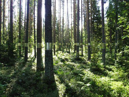 joakim kaminsky and maria poll | clear cut installation, medelpad, sweden (via http://toildrop.com/2011/08/clear-cut/)