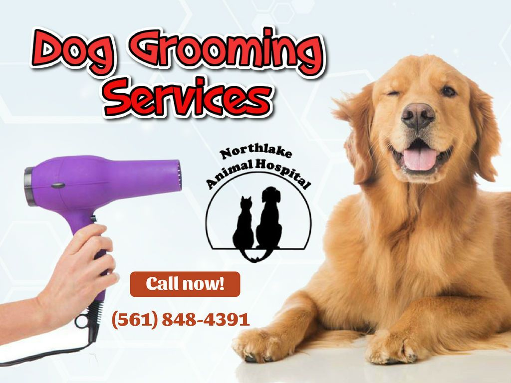Professional Dog Grooming Services Dog Grooming Animal Hospital