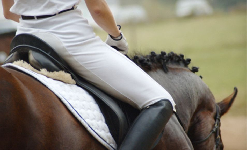 Group or Private Horseback Riding Lesson at Sterling Shields Stables and Riding Academy in Westfield (Up to )