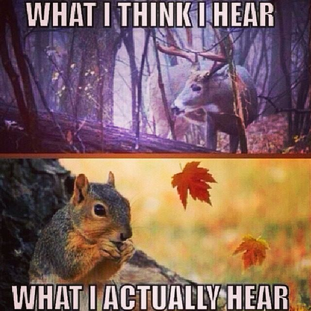 Pure Hatred Towards Squirrels During Deer Season Deer Hunting Humor Hunting Humor Hunting Jokes