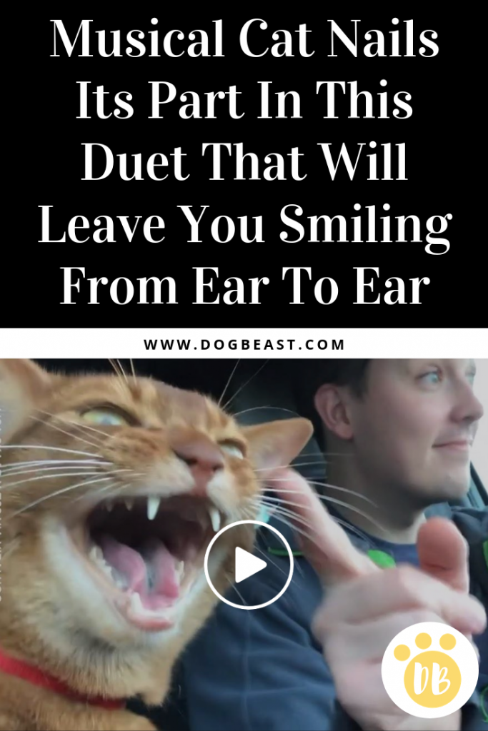 Musical Cat Nails Its Part In This Duet That Will Leave