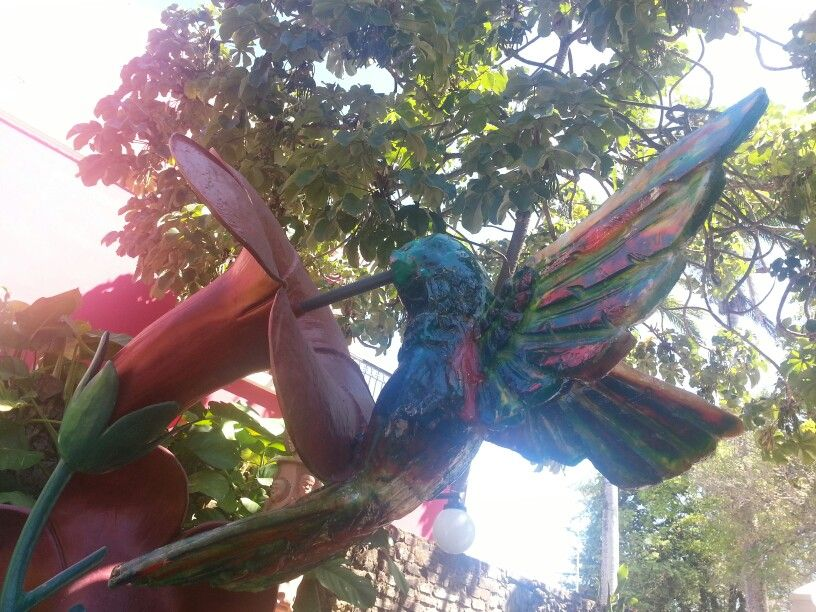 Beija flor #spotthepenguin