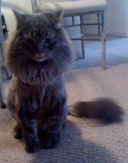 Vent: Petsmart Groomers - Weddingbee-Boards Lion g