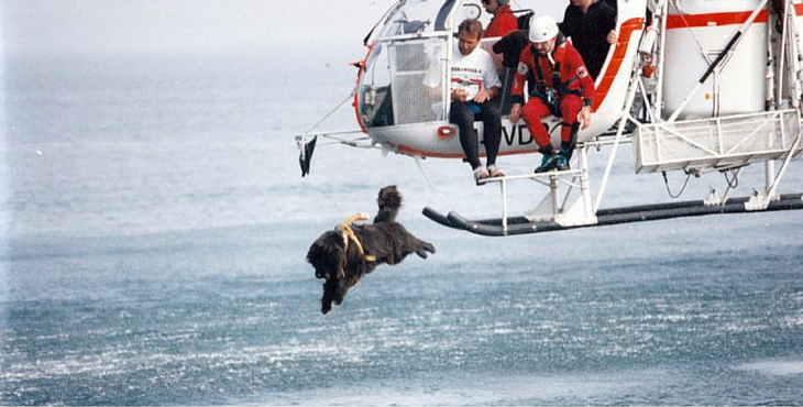 We know it sounds barking mad. But these Newfoundlands really are sea rescue dogs in Italy.