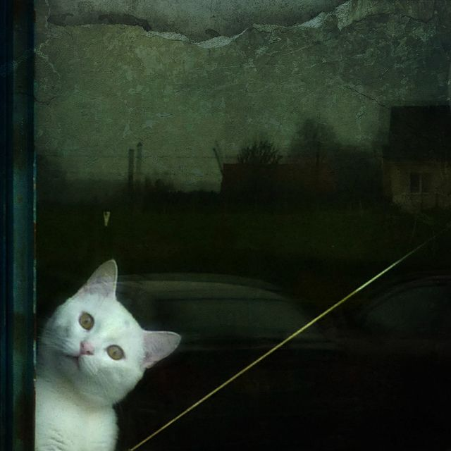 By the way, Eu by basse def, via Flickr
