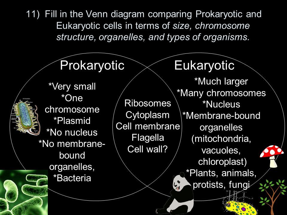 image result for compare and contrast protist prokaryotes and humann rh in pinterest com typable venn diagram venn diagram of bacteria