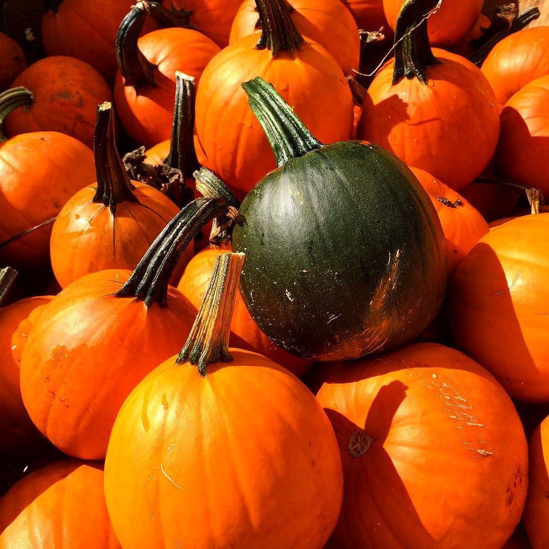 The stars of the show at the #MilfordPumpkinFestival. #IgersNH #VisitNH #Pumpkins  #YankeeMagazine #Harvest #OddBall #ScenesOfNewEngland #Year26 #BackAndBetterThanEver by orangerussian
