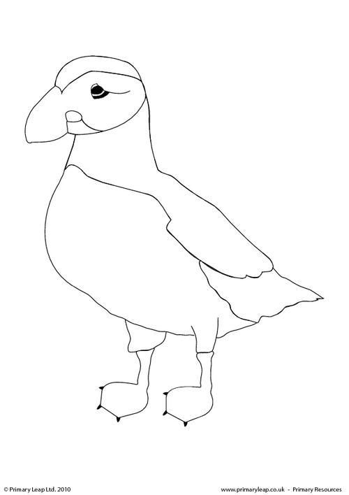 Atlantic Puffin Colouring Page Primaryleap Co Uk Penguin