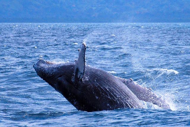 Águas de Pontal: O Futuro das Baleias e um Tratado de Outro Planeta...