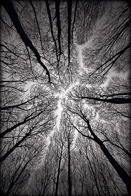 I love the angle and the receding line that the angle of the trees creates.  tree, forest, destiny,