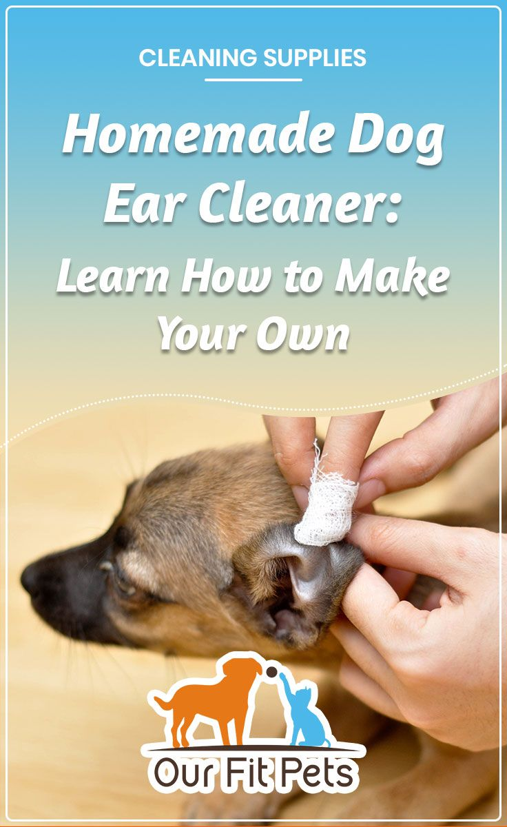 Homemade dog ear cleaner learn how to make your own dog