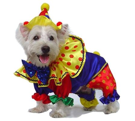 Shiny Clown Dog Costume Small Dog Costumes Dog Halloween Dog
