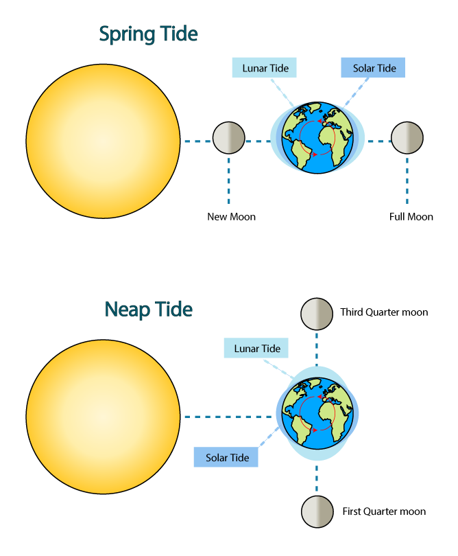 How Do The Phases Of The Moon Affect The Tides Universe
