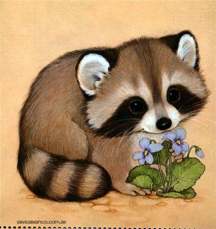 Картинки енота для детей