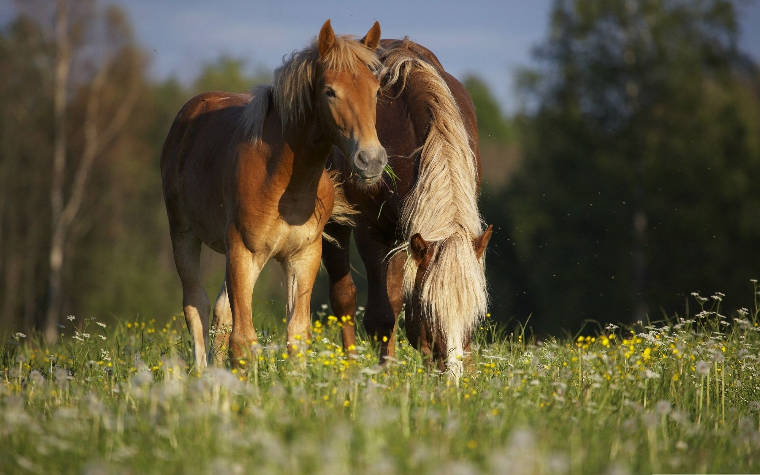 Cool Wallpaper Horse Couple - f63a652d50dd4c5ab7d02880aec37168  Photograph_14367.jpg