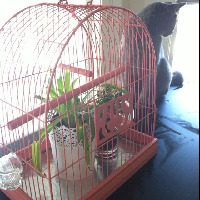 vintage birdcage into a cat proof