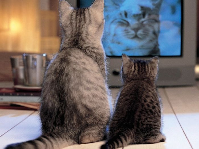 Cat Dreams Dvd Cats Watching Tv Cat Watch Cat Pics Cats And Kittens