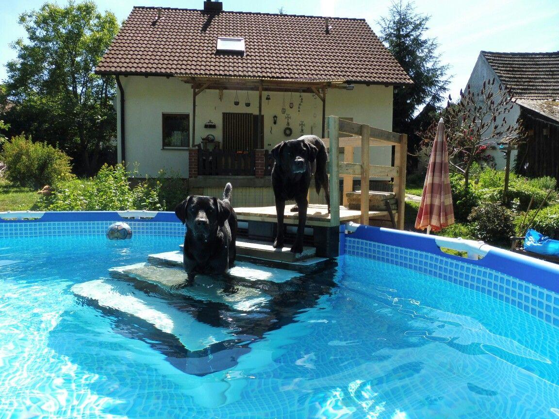 Pool Stairs Dog Ramp Pallets Diy Dog Stairs Dog Pool Pool Pool Steps Inground