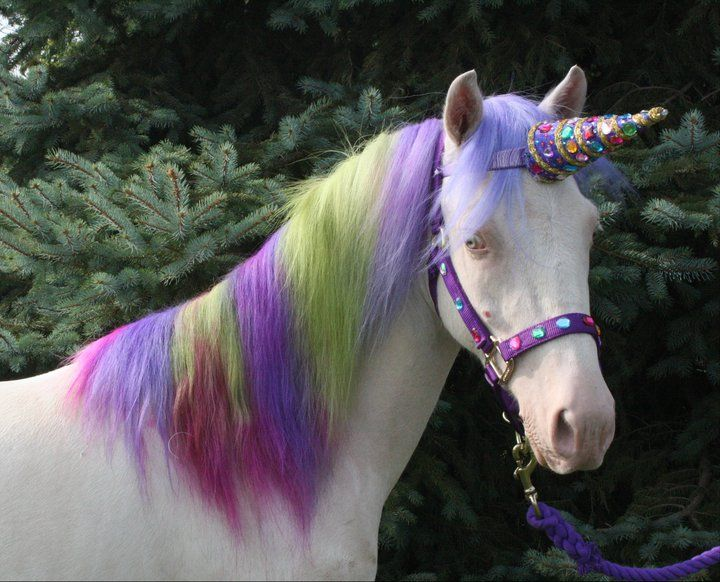 A Unicorn With Images Horse Costumes Unicorn Purple Unicorn