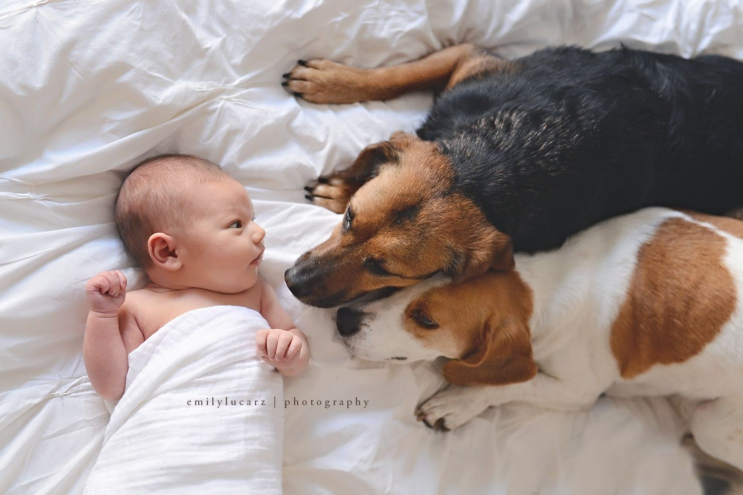 Newborn Photography With Dog